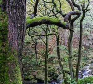 Padley_Gorge_Woods
