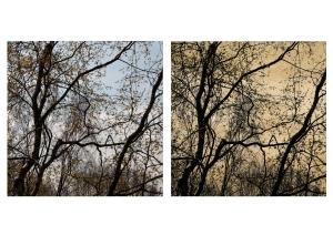 Birch_tree_Diptych