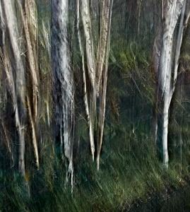 Woodland Impression