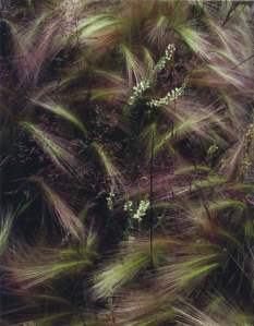 Eliot Porter_Foxtail_grass_Intimate_Landscapes_Photographs